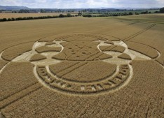 East Field Alton Priors, Wiltshire   26th July 2010   Wheat LOW2