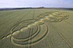 East Field Alton Barnes, Wiltshire | 3rd August 2010 | Wheat LOW2