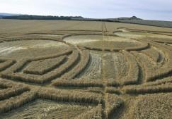 East Field Alton Barnes, Wiltshire | 3rd August 2010 | Wheat LOW5