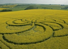 Silbury Hill, Wiltshire | 29th April 2011 | Oilseed Rape L2