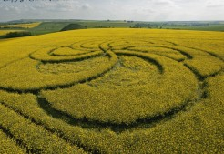 Silbury Hill, Wiltshire | 29th April 2011 | Oilseed Rape LOW