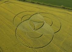 Hannington, Wiltshire | 7th May 2011 | Oilseed Rape L2