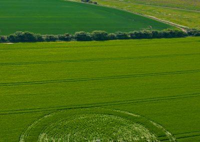 East Kennett, Wiltshire | 17th May 2011 | Barley L2