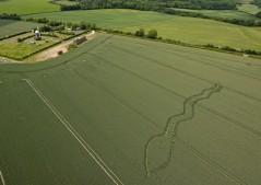 Wilton Windmill, Wiltshire | 1st June 2011 | Wheat L3