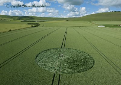 Stanton St Bernard, Wiltshire | 21st June 2011 | Wheat L2