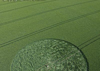Stanton St Bernard, Wiltshire | 21st June 2011 | Wheat L3