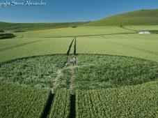 Stanton St Bernard, Wiltshire | 21st June 2011 | Wheat P2