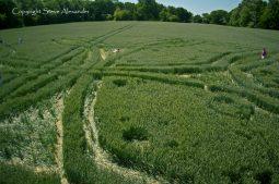 West Woods near Lockeridge, Wiltshire | 21st June 2011 | Wheat P2