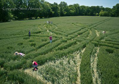 West Woods near Lockeridge, Wiltshire | 21st June 2011 | Wheat P3