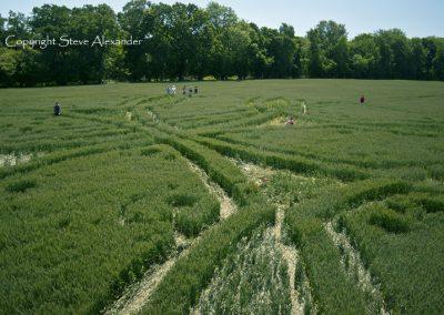 West Woods near Lockeridge, Wiltshire | 21st June 2011 | Wheat P4