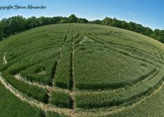 West Woods near Lockeridge, Wiltshire | 21st June 2011 | Wheat P