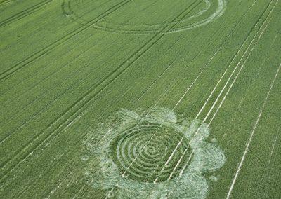 Charlbury HIll, Wiltshire | 29th June 2011 | Wheat BO