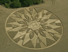 Temple Balsall, Warwickshire | 20th July 2011 | Wheat L