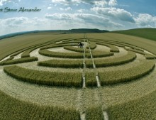 Milk Hill, Wiltshire | 8th July 2011 | Wheat 2nd Stage P