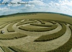 Milk Hill, Wiltshire | 8th July 2011 | Wheat 2nd Stage P3