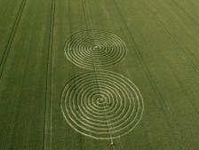 Chaddenwick Hill near Mere, Wiltshire | 13th July 2011 | Wheat L2