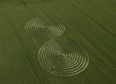 Chaddenwick Hill near Mere, Wiltshire | 13th July 2011 | Wheat L