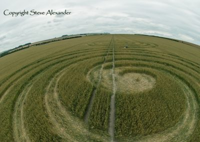 Windmill Hill Avebury, Wiltshire | 13th July 2011 | Wheat P