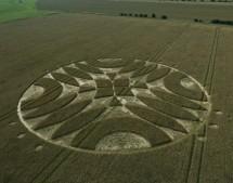 Overton Down Avebury, Wiltshire | 18th July 2011 | Wheat L