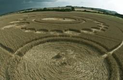 Windmill Hill, Wiltshire | 26th July 2011 | Wheat P3