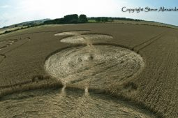Windmill Hill, Wiltshire | 26th July 2011 | Wheat P4