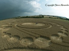 Windmill Hill, Wiltshire | 26th July 2011 | Wheat P