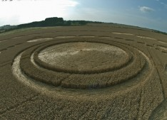 Windmill Hill, Wiltshire | 26th July 2011 | Wheat P2