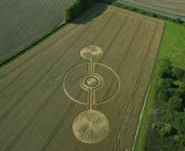 Cooks Plantation near Beckhampton, Wiltshire | 13th August 2011 | Wheat L2