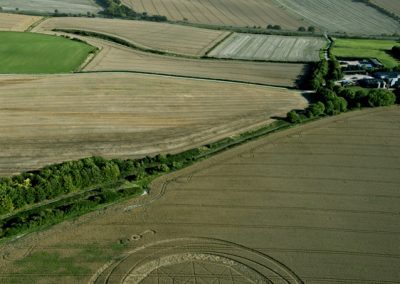 Jubilee Plantation near Cherhill, Wiltshire | 15th August 2011 | Wheat L