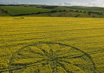 Hill Barn East Kennett, Wiltshire | 15th April 2012 | Oilseed Rape L