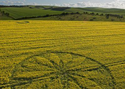 Hill Barn East Kennett, Wiltshire | 15th April 2012 | Oilseed Rape L