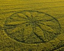 Hill Barn East Kennett, Wiltshire   15th April 2012   Oilseed Rape L