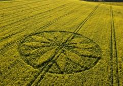 Hill Barn East Kennett, Wiltshire   15th April 2012   Oilseed Rape L2