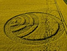 Yarnbury Castle near Winterbourne Stoke, Wiltshire   28th April 2012   Oilseed Rape L