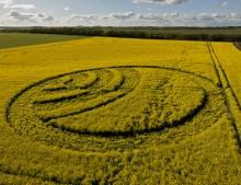 Yarnbury Castle near Winterbourne Stoke, Wiltshire   28th April 2012   Oilseed Rape L2