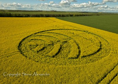 Yarnbury Castle near Winterbourne Stoke, Wiltshire | 28th April 2012 | Oilseed Rape L3