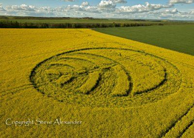 Yarnbury Castle near Winterbourne Stoke, Wiltshire | 28th April 2012 | Oilseed Rape L3