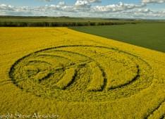 Yarnbury Castle near Winterbourne Stoke, Wiltshire   28th April 2012   Oilseed Rape L3