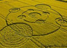 Water Eaton Copse Hannington, Wiltshire   12th May 2012   Oilseed Rape L3