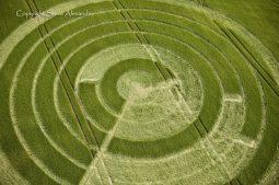 Manton Drove, Wiltshire   2nd June 2012   Barley CL