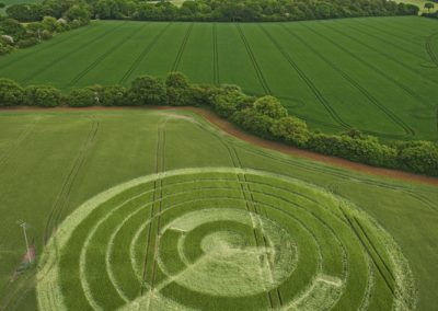 Manton Drove, Wiltshire | 2nd June 2012 | Barley L