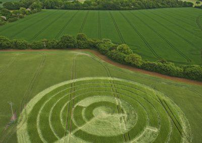 Manton Drove, Wiltshire | 2nd June 2012 | Barley L