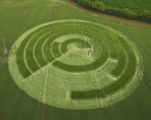 Manton Drove, Wiltshire   2nd June 2012   Barley L