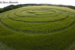 Manton Drove, Wiltshire   2nd June 2012   Barley P