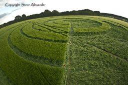 Manton Drove, Wiltshire   2nd June 2012   Barley P2