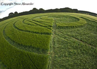 Manton Drove, Wiltshire | 2nd June 2012 | Barley P2