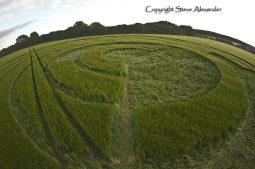 Manton Drove, Wiltshire   2nd June 2012   Barley P3