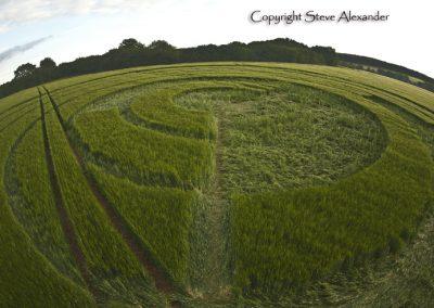 Manton Drove, Wiltshire | 2nd June 2012 | Barley P3