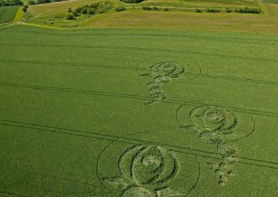 Woodborough Hill, Wiltshire | 9th June 2012 | Wheat L
