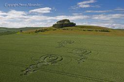 Woodborough Hill, Wiltshire   9th June 2012   Wheat L3